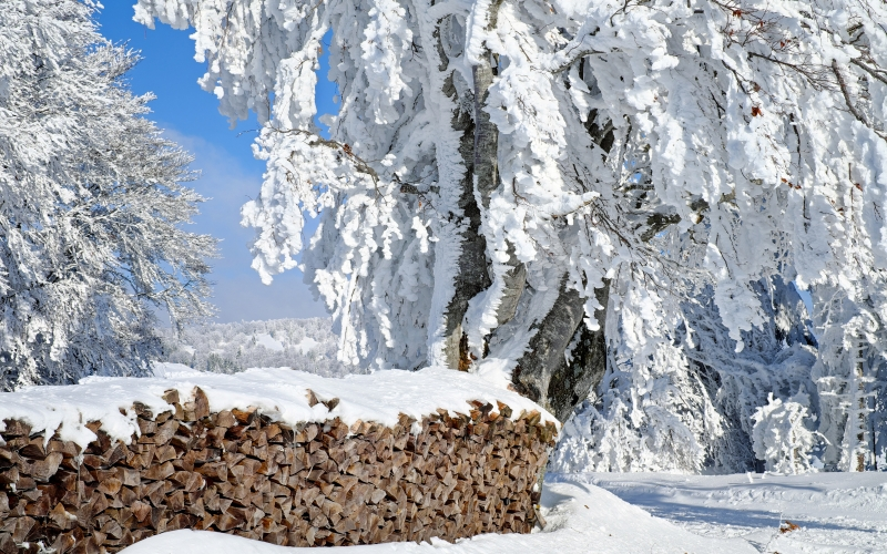 firewood, timber, stock, landscape, snowy, winter, cold, white, trees, nature, forest