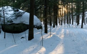 nature, landscape, trees, forest, sunlight, snow, winter, woods, stone