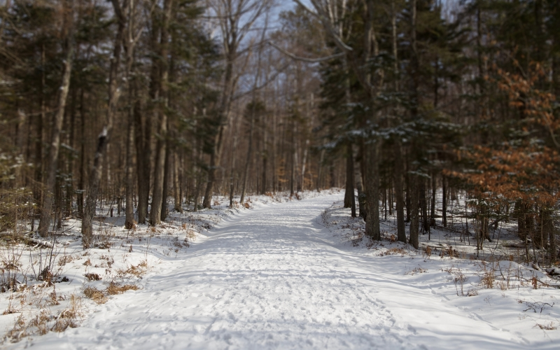 trees, hiking, winter, snow, forest, woods, day, sunny, white, nature, tilt shift