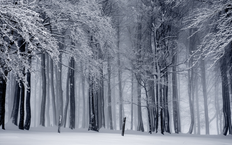winter, snow, wintry, cold, snowy, white, trees, forest, nature, woods, winter forest, landscape, frost