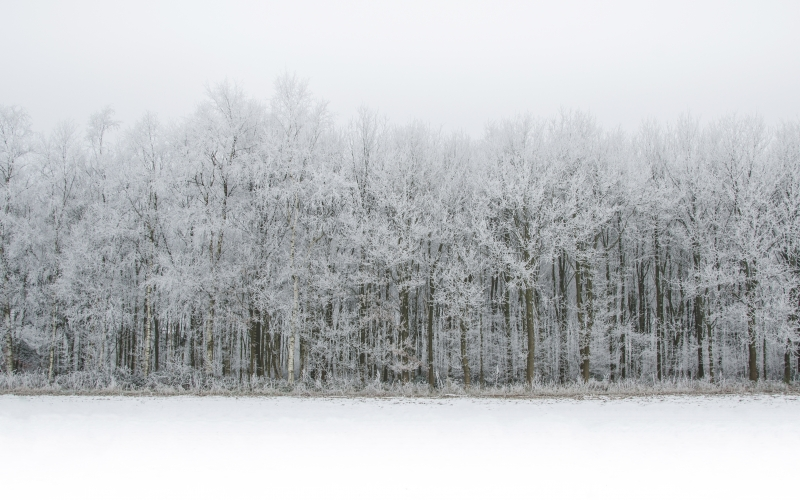 cold, fog, forest, frost, frosty, frozen, landscape, season, nature, snow, snowy, trees, winter, woods