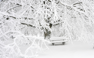 bench, cold, empty, fog, foggy, snow, tree, branches, winter, white, frost, frozen