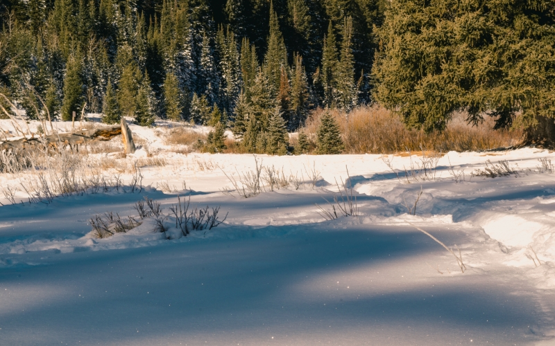 daylight, forest, grass, landscape, nature, outdoors, season, snowy, trees, winter, woods
