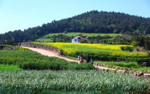 scenery, nature, panorama, farm, spring, korea, rape flowers, yellow, green, field, house, forest, trees