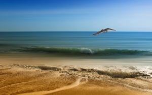 sea, vacancy, sand, seagull, spring, summer, bird flight, sky, wings, blue, maritime landscape, flight, freedom, water, waves, horizon, ocean