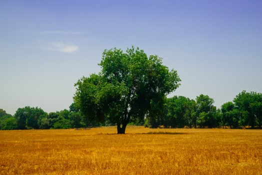 agriculture, bright, countryside, arable land, autumn, farm, field, grass, haymaking, landscape