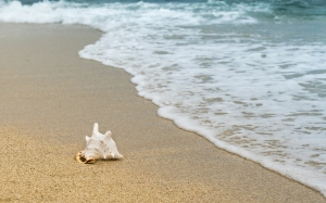 beach, coast, sea, natural, ocean, paradise, relax, resort, sand, scalloped, shell, shore, summer, travel, tropical, water, waves