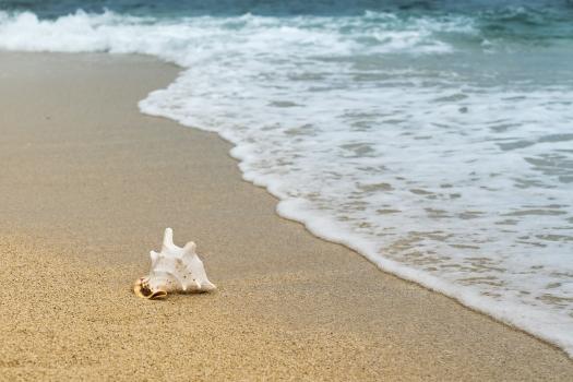 beach, coast, sea, natural, ocean, paradise, relax, resort, sand, scalloped, shell, shore, summer, travel, tropical, water, waves