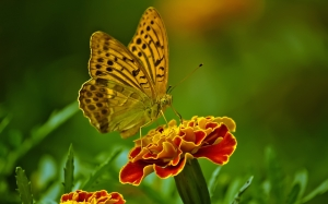 butterfly, nature, flower, insect, close up, plant, colorful, yellow, green