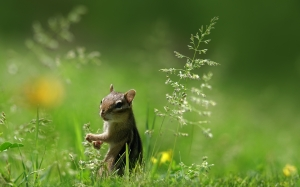 cute, squirrel, grass, green, nature, animal, rodent, buttercup, blur, close