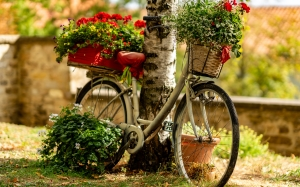 bike, bicycle, basket, nature, flowers, overgrown, decoration, decorate, tree