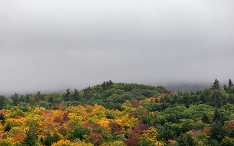 wood, nature, autumn, fall, foliage, trees, forest, landscape, leaves, maple, sky, clouds, fog, october