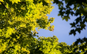 nature, autumn, foliage, trees, leaves, sky, blue, yellow, bright, sunny
