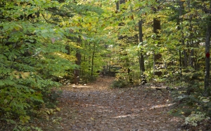 path, nature, trees, foliage, autumn, fall, forest, leaves, wood