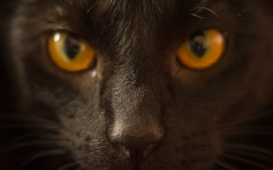 cat, looking, yellow, feline, pet, portrait, fur, black, kitty, brown, eye, dark, close up