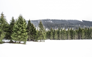 winter, trees, snow, mountains, forest, white, green, pine, woods, hill