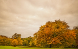 autumn, season, trees, colorful, grass, clouds, orange, green, park, pond, landscape, fall