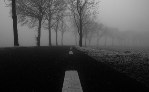 winter, frost, fog, road, asphalt, cold, dark, misty, grass, trees, pavement, black and white