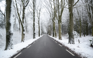 winter, frost, fog, road, cold, trees, snow, white, nature, landscape, asphalt