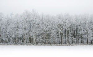 landscape, december, white, snow, forest, winter, cold, field, nature, season, frost, icy, trees, view, scene, woods