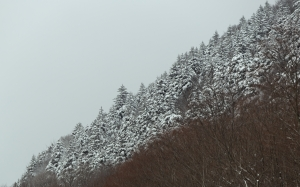 nature, winter, snow, trees, sky, clouds, mountain, wood, landscape
