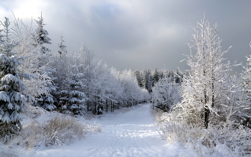 landscape, winter, forest, snow, path, wood, nature, clouds
