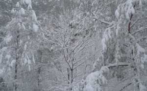 blizzard, february, winter, snow, trees, nature