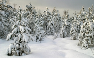trees, sky, landscape, forest, cold, nature, blue, season, white, snow, wood, clouds, fir, winter
