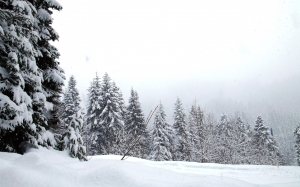 snowfall, winter, forest, wood, landscape, nature