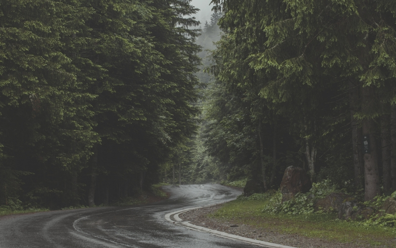 clouds, environment, fog, forest, mist, outdoors, rain, road, trees, wet, wood, nature