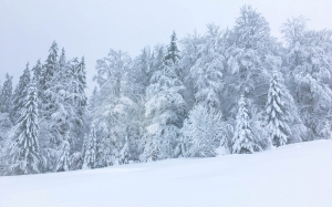 winter, snow, forest, wood, trees, snowy, lanscape, nature