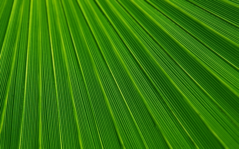 background, green, leaf, nature, palm, pattern, plant, stripes, texture