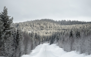 winter landscape, sweden, nature, road, forest, snow, trees
