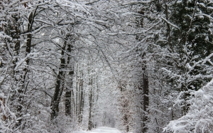 nature, forest, snow, winter, wood, trees, frost, cold, landscape, branches, road, path