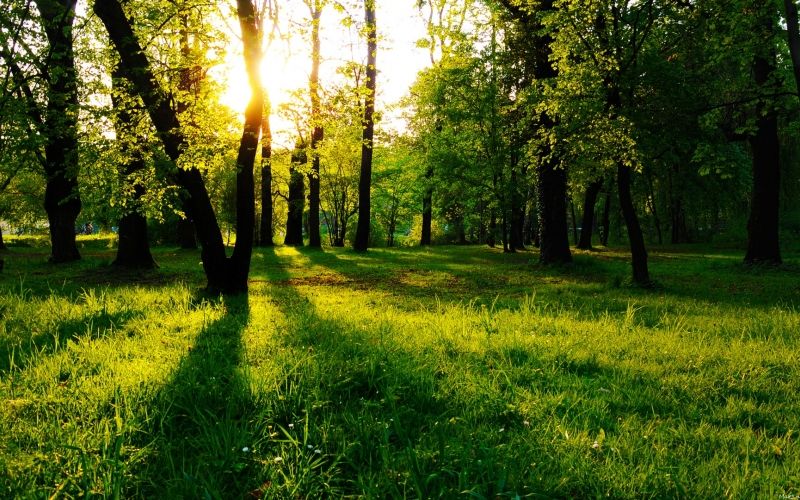 forest, park, wood, nature, trees, leaves, landscape, nature, green, sun