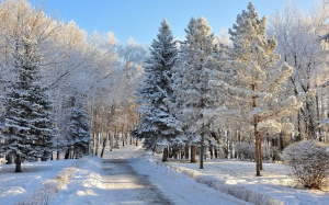 winter, park, snow, landscape, day, road, path, trees, ate, pine, frost