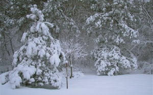 snow, snow storm, yard, trees, new year, winter