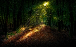 landscape, trees, nature, forest, path, grass, light, sunlight, morning, leaf, atmosphere, evening, autumn, darkness, rainforest, deciduous, grove, wood