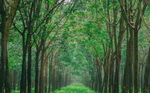 green, trees, woodland, nature, forest, grove, path, park, wood, grass