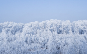 winter, frost, freeze, cold, forest, landscape, trees, snow, season, ice, weather, outdoors, frozen, white, wood