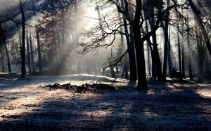 trees, nature, forest, snow, winter, light, mist, sunlight, morning, evening, autumn, weather, darkness, season, light beam, wood
