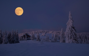 snow, winter, cold, frozen, wintry, trees, ice, full moon, moonlight, night, forest, mountain, cottage, house, wood, landscape, morning, evening