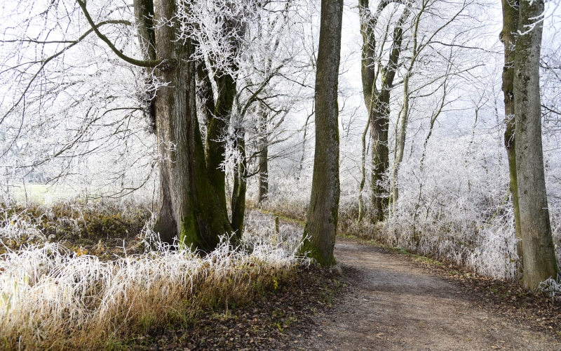 path, nature, landscape, hoarfrost, cold, winter, frozen, frost, wintertime, wintry, winter mood, leaves, branches, winter forest, trees, wood