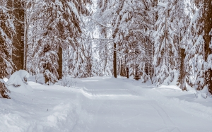 forest, winter, cold, wintry, winter forest, wood, trees, frost, sun, landscape, nature, snow, winter mood, path, road