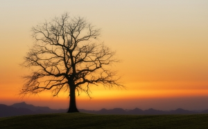 evening, tree, sunset, twilight, nature, atmosphere, mood, silhouette, sky, winter, orange, hill, field, sunrise, scenic, landscape