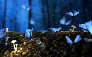 butterfly, butterflies, blue, forest, fantasy, woods, dream, surreal, glow, mushrooms