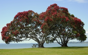 pohutukawa tree, beach, sea, tree, park, bench, spring, nature, landscape, grass