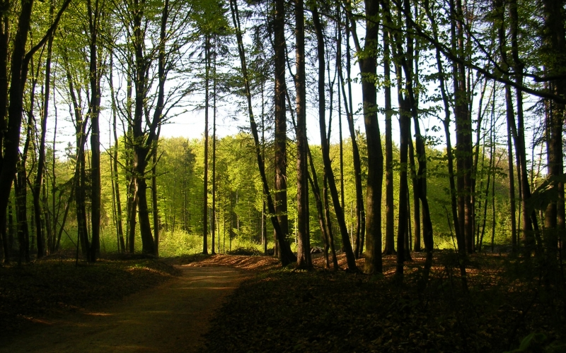 spring, forest, nature, wood, landscape, trees
