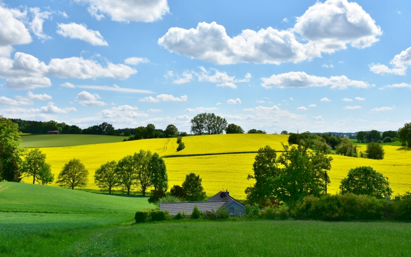 landscape, nature, oilseed rape, field, agriculture, rural, panorama, spring, clouds, sky, arable, green, yellow, meadow, hill, idyllic