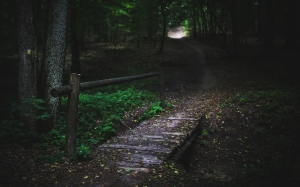 bridge, wood, forest, trees, green, way, route, path, fairytale, dark, nature, mystical